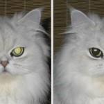 Pet_Eye_Fix_Guide_Lite-cat
