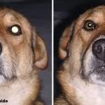 Pet_Eye_Fix_Guide_Lite-dog