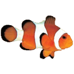 Clownfish for Skype 4.52 portable